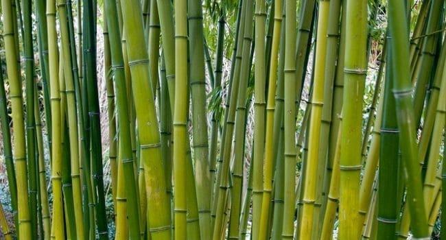 Bambusovi štapići za proricanje budućnosti